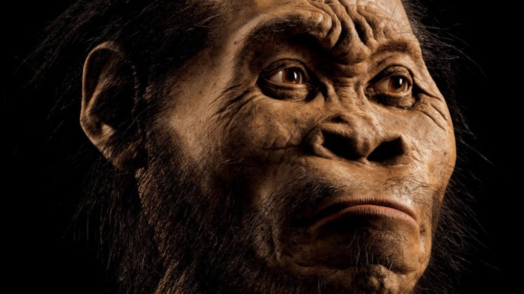 Homo naledi por el paleoartista John Gurche