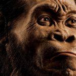 El ranking de las 10 nuevas especies descubiertas en 2015