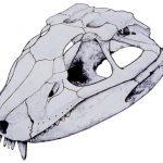 Descubren un fósil de cocodrilo herbívoro en Argentina