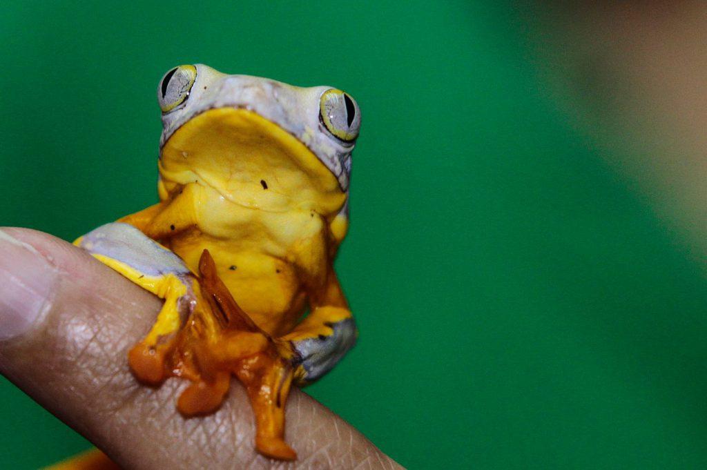 El sapo de Ecuador y la biomedicina