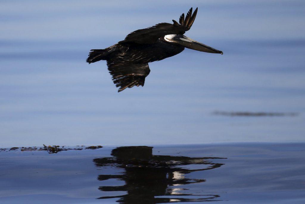 90.000 toneladas de combustibles fósiles contaminan los océanos