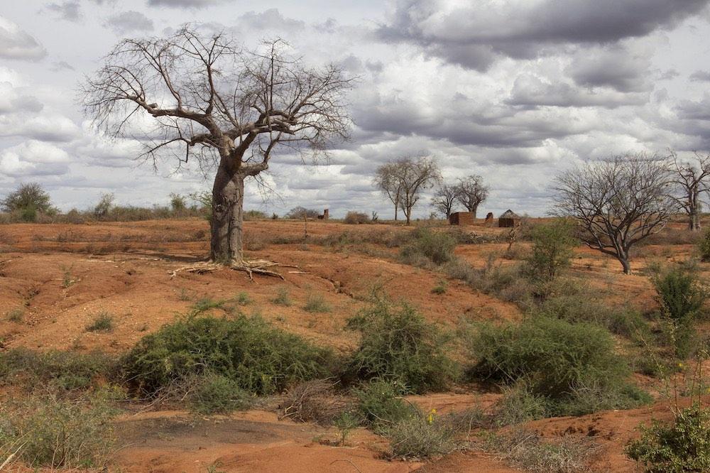 Árbol baobab en un paisaje degradado y árido en la provincia Oriental de Kenya- Foto: Flore de Preneuf, Banco Mundial