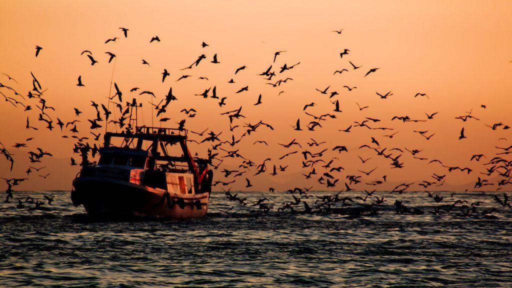 Barco pesquero al atardecer- Hernán Piñera