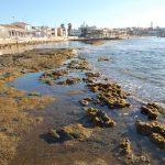 Describen un nuevo molusco que crea microarrecifes en el Mediterráneo