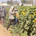 Un valle agrícola rescatado con agua de una planta de tratamiento y 10 años de trabajo