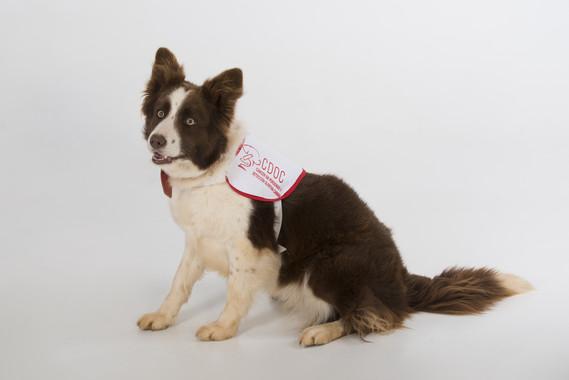 La perra Yuca, olfatea cáncer de próstata- Hospital La Fe
