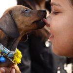 La relación del perro con el hombre inició hace 32,000 años; y fue de mutuo beneficio