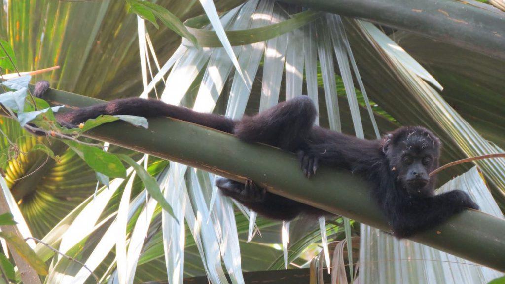 Primates mexicanos