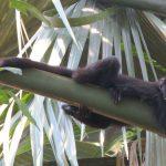 Al rescate de los primates mexicanos