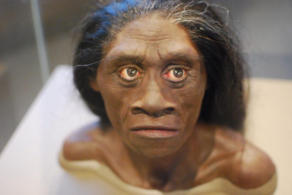 Reconstrucción de una mujer Homo floresiensis- Karen Neoh