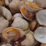 Los cánceres contagiosos se propagan entre especies de moluscos