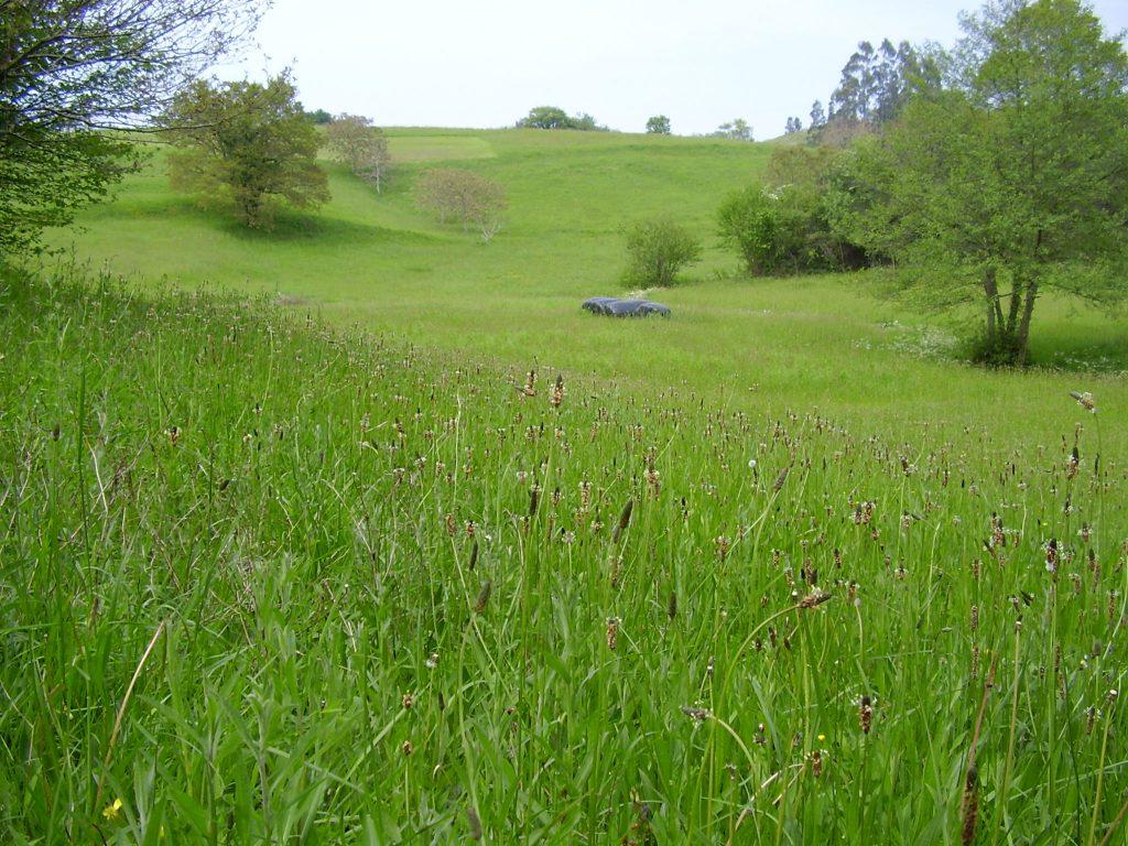 La biodiversidad ha caído por debajo del umbral seguro por el uso del suelo