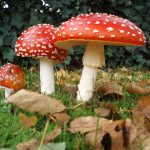 Las plantas se alían con los hongos para aprovechar el CO2 atmosférico