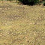 La desertificación amenaza 80% de las tierras agrícolas