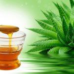 Inulina y jarabe de fructosa, derivados del agave, susceptibles de exportación
