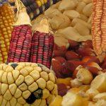 Biodiversidad, necesaria para alimentar al México del siglo XXI: Sarukhán