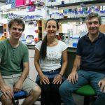 Posible diana terapéutica contra la malaria y el mal de las 'vacas locas'