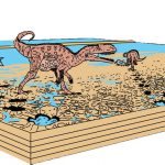 Dinosaurios carnívoros esperaban la marea baja para ir a pescar