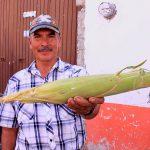 Jala, el maíz gigante