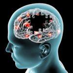 Neurociencia la complejidad del funcionamiento e interrelación de las neuronas