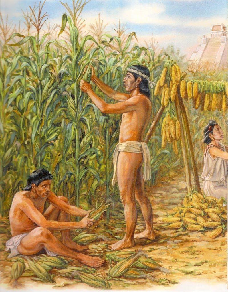 Agricultura en la época prehispánica