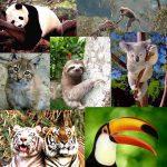 Se vive en el planeta la sexta gran extinción de especies. el hombre es el culpable