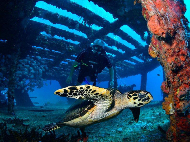 Fauna marina y buceo dentro de un barco hundido