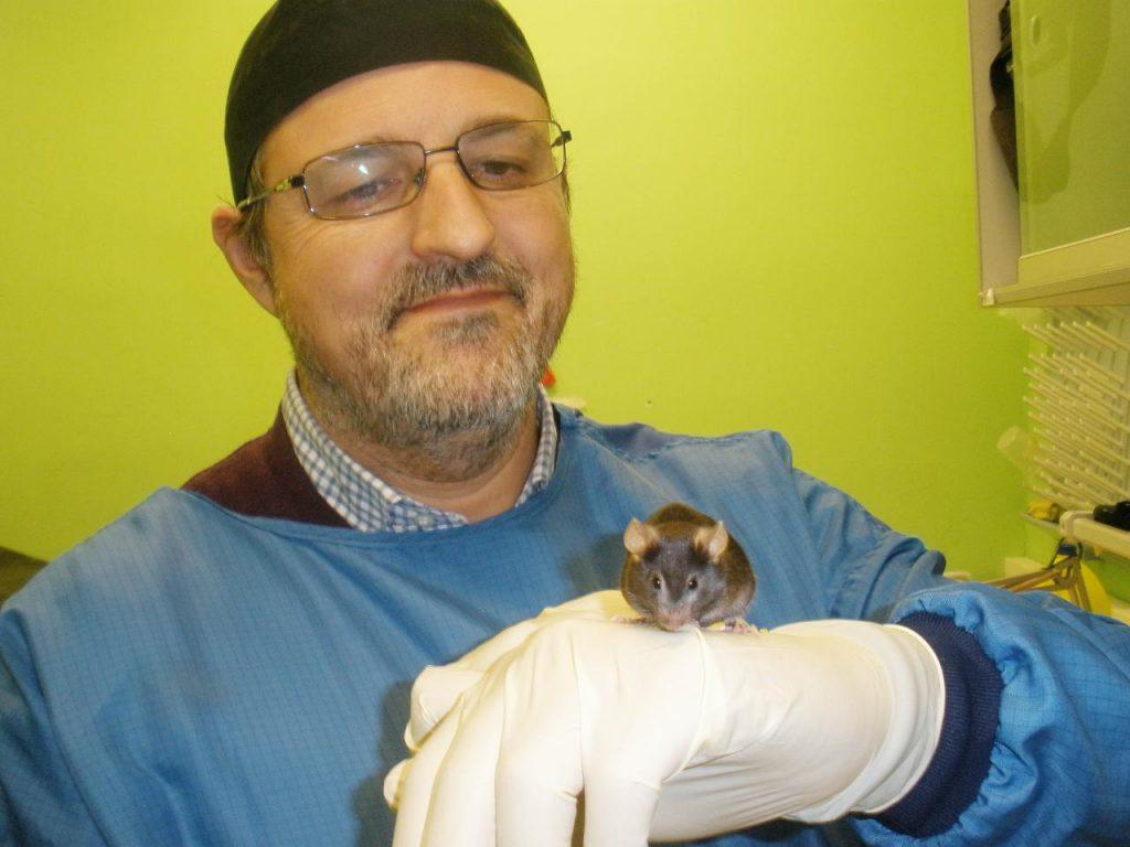 Un investigador de la Universidad de Córdoba muestra un ratón de experimentación empleado en el estudio de los efectos de la restricción calórica en el organismo. / UCO