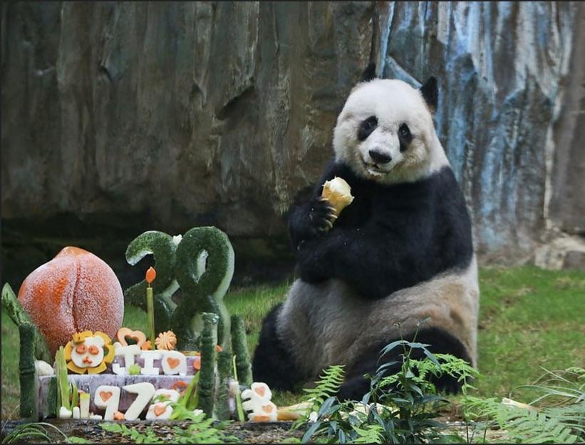 Jia Jia con su pastel por sus 38 años