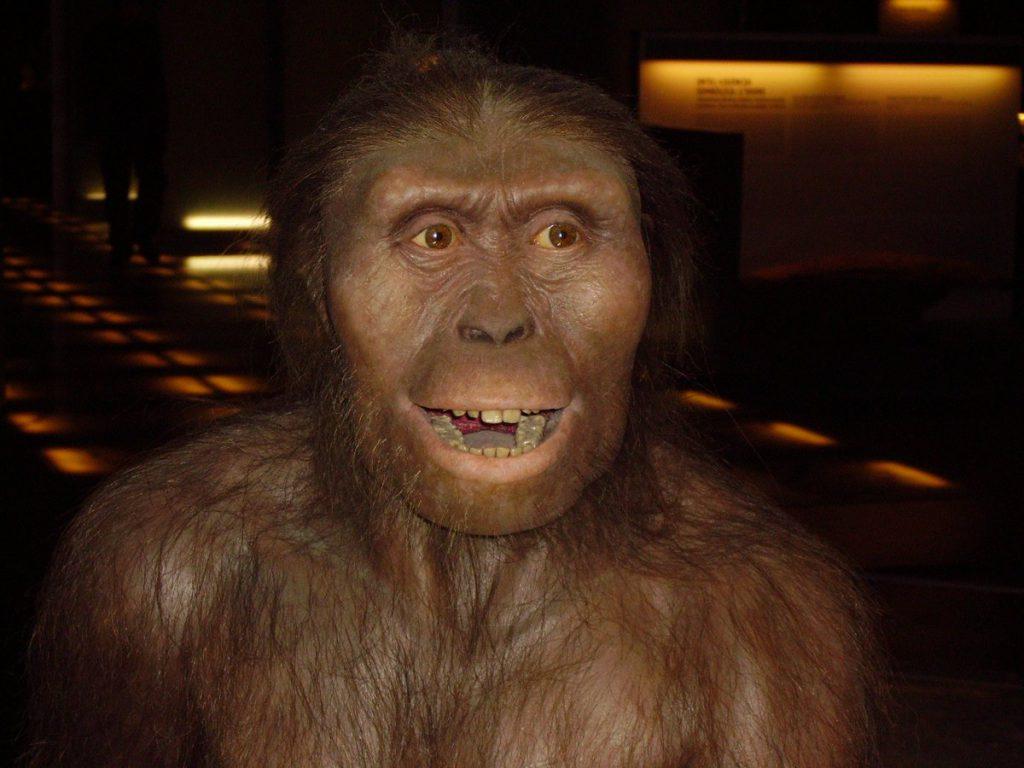 Reconstrucción de Australopithecus afarensis / Wikipedia