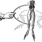El experimento de Luigi Galvani con las ancas de rana