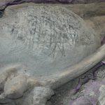 En Baja California Sur, vestigios de hasta 30 millones de años