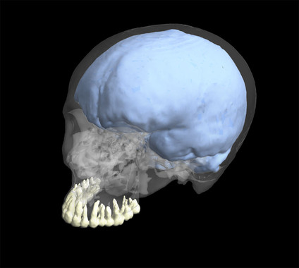 Reconstrucción 3D del cráneo de un humano moderno mostrando los dientes y la morfología craneal / George Washington University