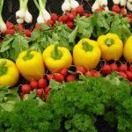 La agricultura orgánica combina tradición, innovación y ciencia