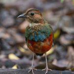 El pájaro que resultó ser doce especies en una