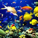 Base de metadatos de investigación marina en México, proyecto internacional