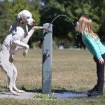 Los perros sí se comunican con los humanos: Usan expresiones faciales