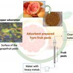 Limpiar aguas contaminadas, con material hecho de cáscaras de frutas