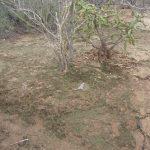 El estudio de costras biológicas para la rehabilitación de suelos desertíficados y erosionados