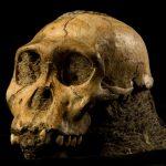 Una especie de homínido desconocida es presentada el 9 de abril de 2010