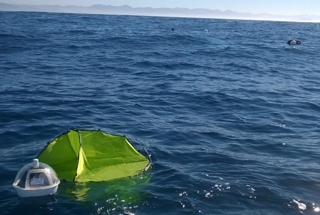 Doris, una sonda oceanográfica mexicana, con tecnología satelital