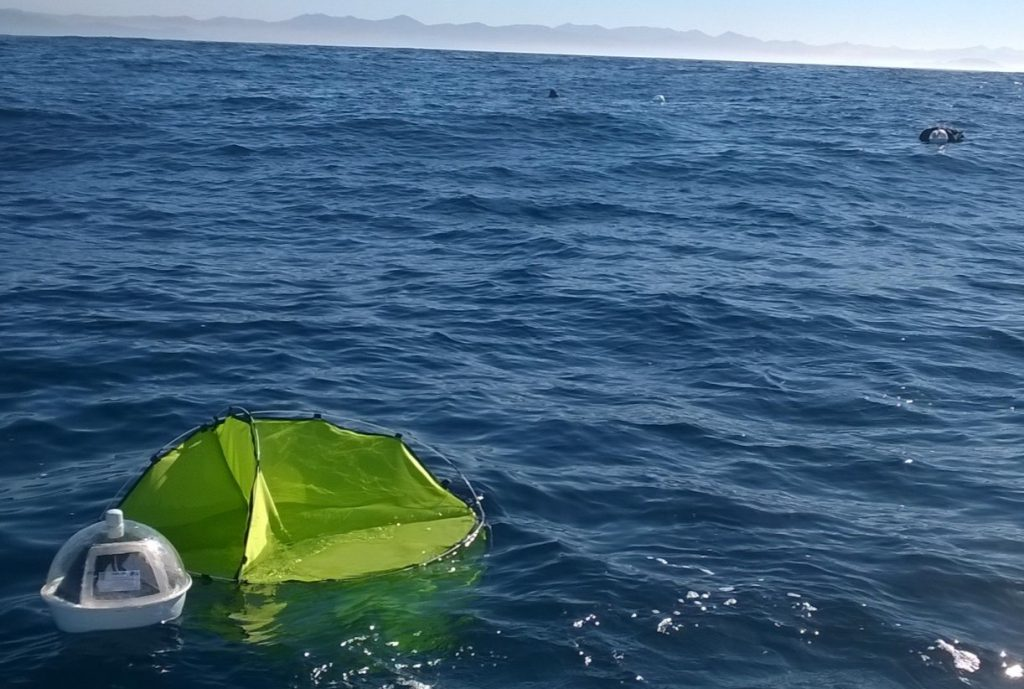 Doris, una sonda oceanográfica mexicana