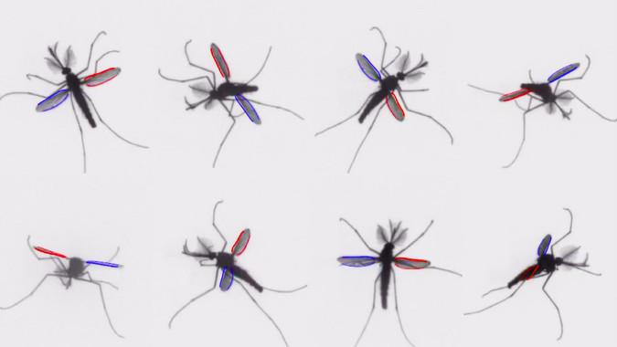 El mecanismo de los mosquitos al volar- Bomphrey/Nakata/Phillips/Walker