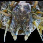 Gusano marino, cuya mandíbula se hace suave o dura, inspira material para usar en robots blancos