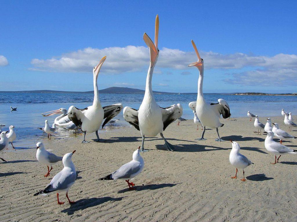 Utilizar las aves, como indicador de calidad ambiental, proyecto conjunto UV y Apiver