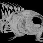 Un pez que inyecta veneno con los efectos de la heroína a sus presas