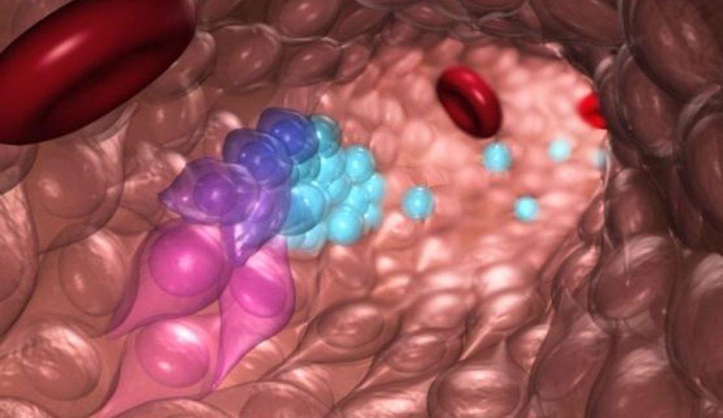 Células madre para la creación de sangre- O'Reilly Science Art