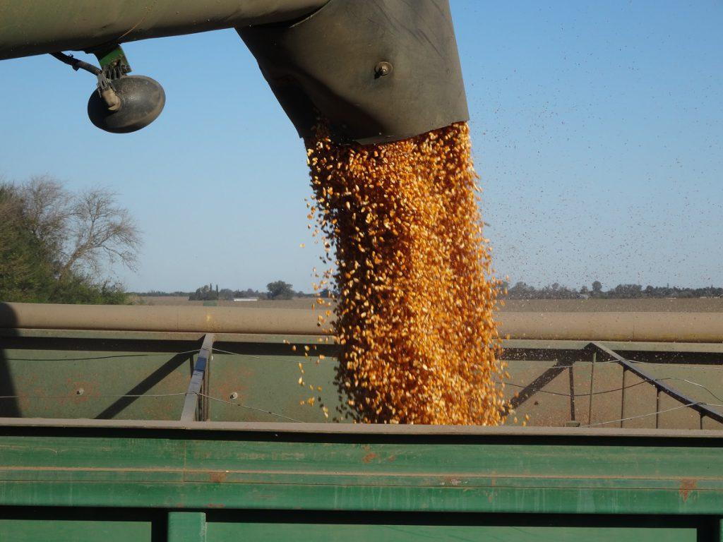 Casi la mitad de los alimentos que consumimos en México son importados: CNA