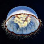 Hace unos 3 mil 700 millones de años surgieron las primeras formas de vida acuática