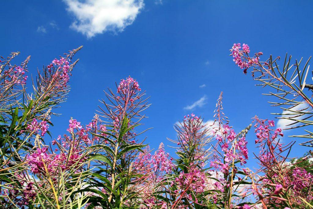 Polinización de plantas